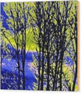 Spring Woodland  Wood Print