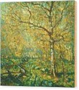 Spring Woods Wood Print