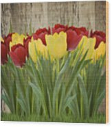 Spring Yellow And Red Tulips Wood Print