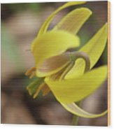 Spring Yellow Flower Wood Print
