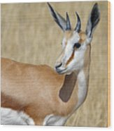 Springbok Portrait Wood Print