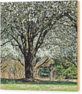 Spring's Canopy Wood Print