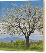 Springtime Apple Tree Panorama Wood Print