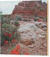 Springtime At Arches National Park Wood Print