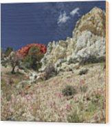 Springtime At Red Rock Canyon Wood Print