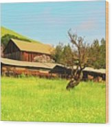 Springtime Barn San Francisco Bay Wood Print by Gus McCrea
