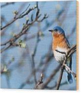 Springtime Blue Wood Print