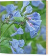 Springtime Bluebells  Wood Print