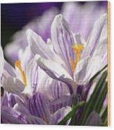 Springtime Color Wood Print