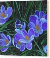 Springtime Crocous Wood Print