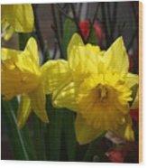 Springtime Daffodils Wood Print