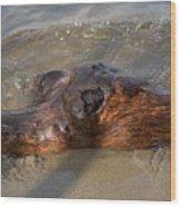 Springtime Driftwood Wood Print