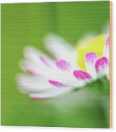 Springtime - Flower Wood Print