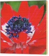 Springtime - Flowers Wood Print