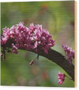 Springtime Forest Pansy Redbud Branch Wood Print