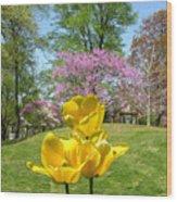 Springtime In Bridgeton Missouri Wood Print