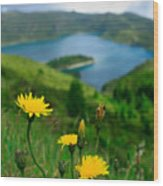Springtime In Fogo Crater Wood Print