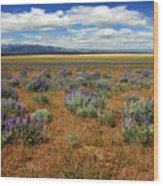 Springtime In Honey Lake Valley Wood Print