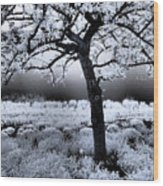 Springtime In Infrared Wood Print