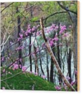 Springtime In The Mountains 2 Wood Print