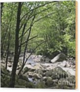 Springtime In The Smoky Mountains Wood Print