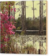 Springtime In The Swamp Wood Print
