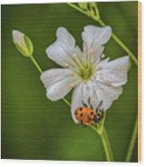 Springtime Ladybug Wood Print