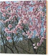 Springtime Seasonal Pink Blossom Flowers Baslee Wood Print