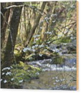 Springtime Stream In The Smokies Wood Print
