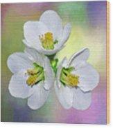 Springtime Triplets By Kaye Menner Wood Print