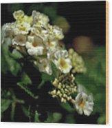 Sprinkles On Lantana Flower Wood Print