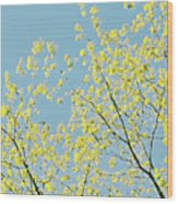 Sprint Blossom  Wood Print