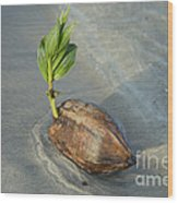 Sprouting Coconut Wood Print