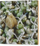 Sprouts And Other Healthy Food Wood Print