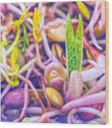 Sprouts Are Magic Wood Print