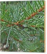 Spruce Drops Wood Print