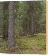 Spruce Forest  Wood Print
