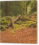 Spruce Logs Leith Hill Surrey 2014 Wood Print