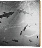 Squales Fish Wood Print