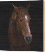 Square Horse Portrait Wood Print