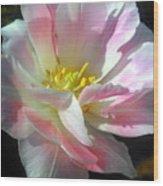 Square Tulip Wood Print