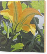 Squash Blossom Wood Print