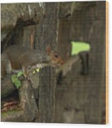 Squatting Squirrel Wood Print