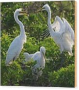 Squawk Of The Great Egret Wood Print