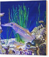 Squid In Monterey Aquarium-california Wood Print