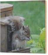 Squirrel 2 Wood Print