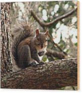 Squirrel 8 Wood Print
