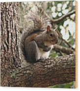 Squirrel 9 Wood Print