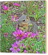 Squirrel Among Coreopsis In Huntington Gardens In San Marino-california   Wood Print