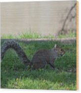 Squirrel At A Stand Still Wood Print